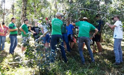 Cruz Machado realiza dia de campo sobre poda de erva-mate