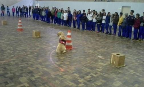 """Cão """"Uzzy"""" faz treinamento em colégio de União da Vitória"""