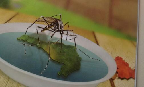 Sábado tem mobilização contra o mosquito da Dengue