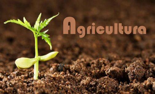 Secretaria de Agricultura de UVA centraliza os serviços