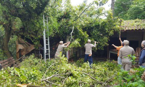 Vento derruba árvore no Morro do Cristo em UVA