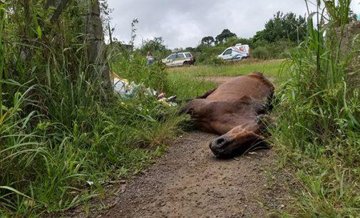 Animal é sacrificado por maus tratos em União da Vitória