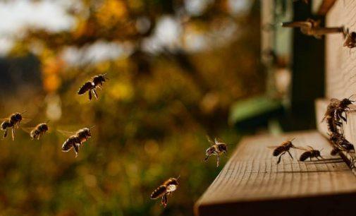 Homem morre após ataque de abelhas em Paulo Frontin