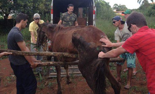 Polícia Ambiental atende situação de maus tratos