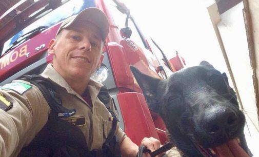 Cadela Kira auxiliará bombeiros de UVA em trabalhos de buscas