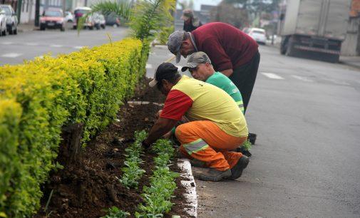 Equipe de Urbanismo de UVA realiza plantação de flores de inverno