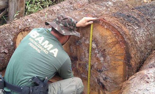 IBAMA faz operação contra corte de madeira em Bituruna