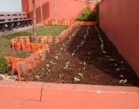 CRAS do bairro Bela Vista em UVA ganha horta