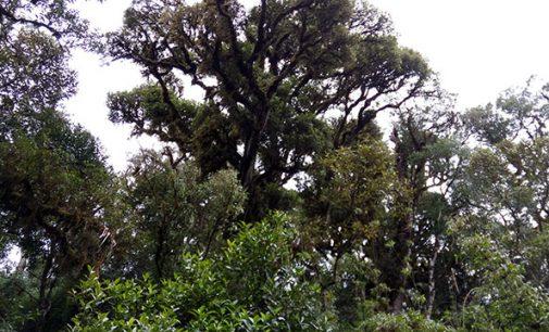 """Bituruna está no projeto: """"Aqui preservamos uma árvore para cada paranaense"""""""