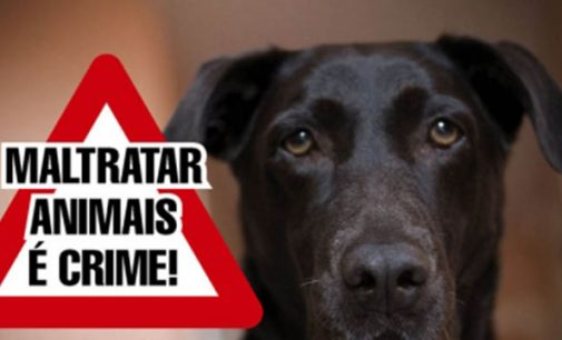 Moradora denúncia maus tratos a animal no São Braz