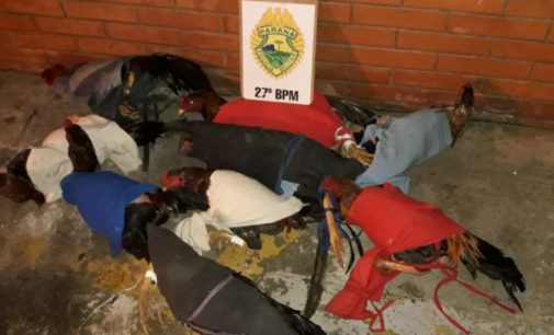 PM de UVA fecha rinha de galo no Rio Vermelho