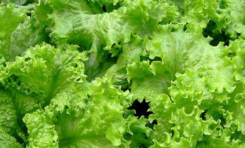 Projeto Hortifruticultura mostra-se eficaz em meio à crise