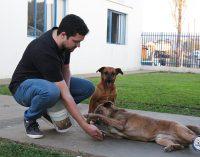 Acadêmicos da Uniguaçu incentivam guarda responsável de animais