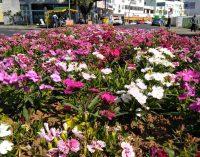 UVA fica mais linda com flores da estação