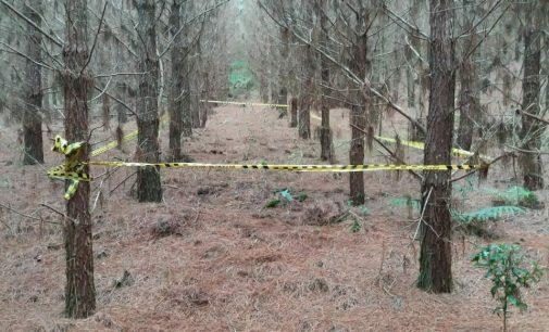 Agricultor encontra ossada humana em Paula Freitas