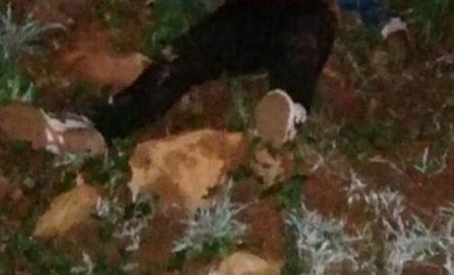Homem é morto a facadas no interior de Bituruna