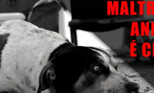 Cão é ferido por morador em União da Vitória