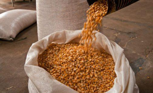 Produtores rurais já podem solicitar sacas de milho em Bituruna