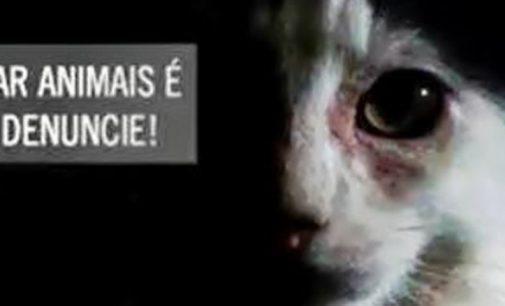 PM registra crime de crueldade contra animais