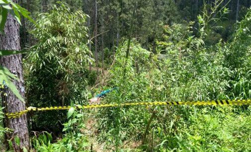 Homem morre ao ser atingido por árvore em Mallet