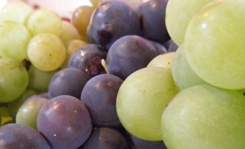 Baixa produção de uva cancela a 27ª Festa da Uva de Bituruna