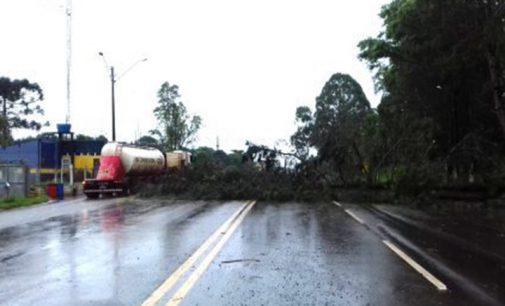 Chuva e fortes ventos derrubam árvores no Sul do PR