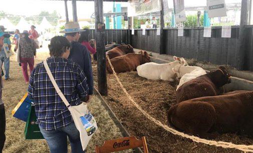 "Agricultores de General Carneiro participam do ""Dia de Campo Alfa"""