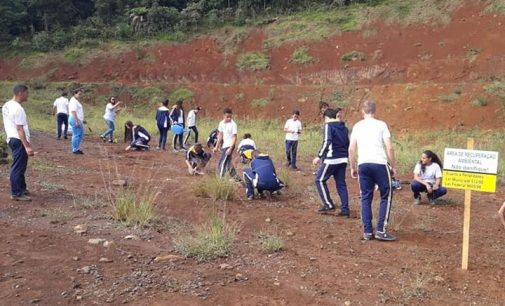 Secretaria de Meio Ambiente de Porto União realiza plantio de árvores
