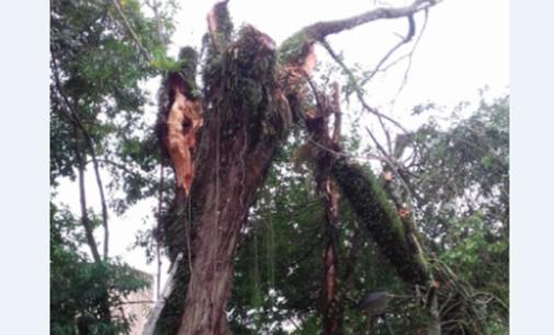 Urbanismo de Porto União realiza poda de árvore no Parque Novo