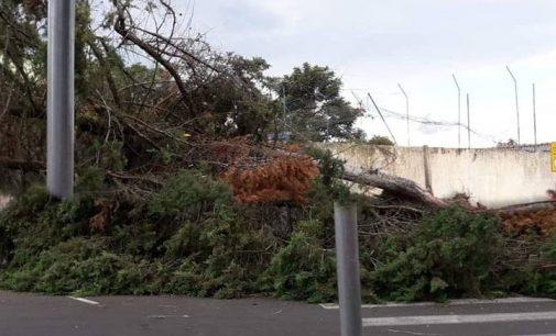 Vento forte derruba árvore e danifica residência em Porto União