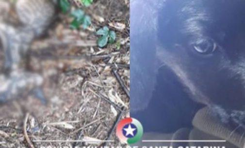 Policiais de PU atendem caso de maus tratos a animais