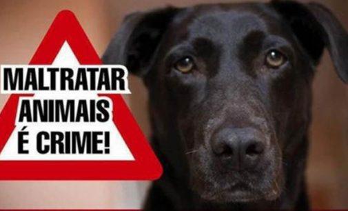 Quatro cachorros são envenenados em União da Vitória