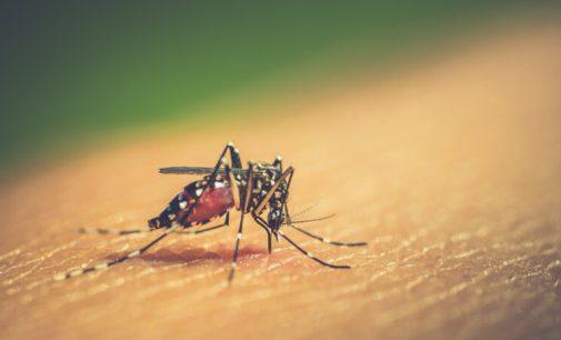 440 focos da Dengue são identificado em União da Vitória