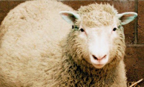 Ovelha é furtada na localidade do Iratim em General Carneiro