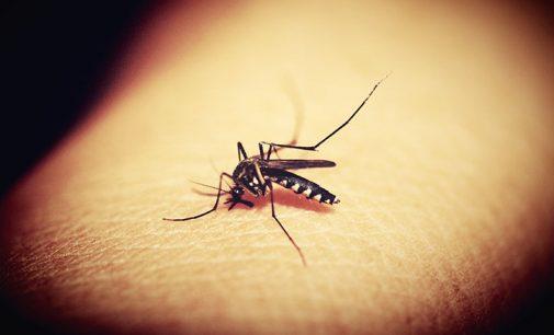Porto União da Vitória faz mutirão contra o mosquito Aedes aegypti