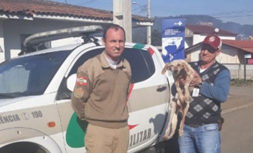 Crime contra animais aumenta em Porto União