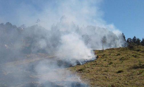 Incêndio em vegetação aumenta na região Sul do Paraná