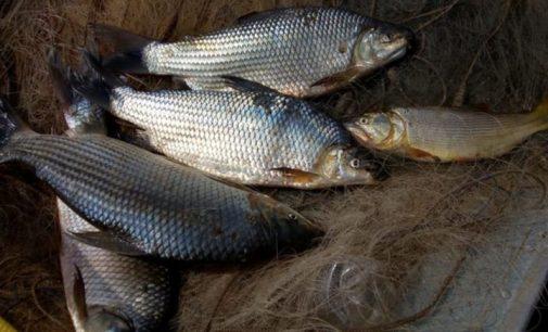 Três homens são presos pela Polícia Ambiental em Bituruna