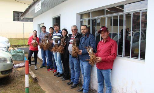 UDs de uvas começam a ser implantadas em Bituruna