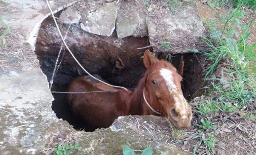 General Carneiro: Cavalo cai em buraco