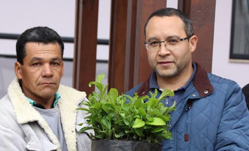 Entrega de mudas de Erva-Mate beneficia mais 35 produtores