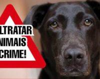 Moradora faz denùncia de envenenamento de animais