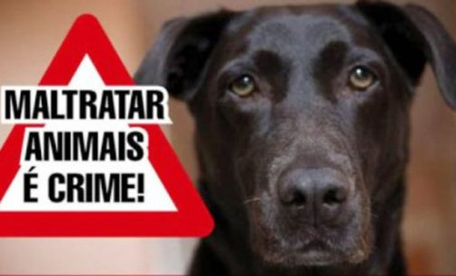 Animal é recolhido pela PM, após denúncia de maus tratos