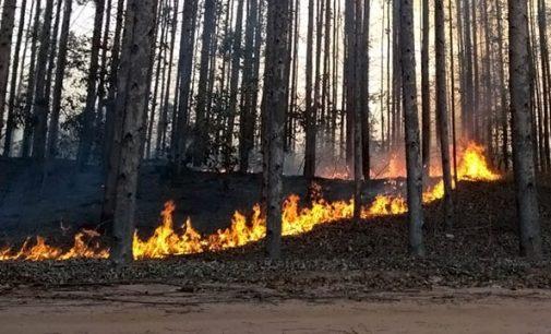 Incêndio atinge plantação de eucalipto na cidade de Porto Vitória
