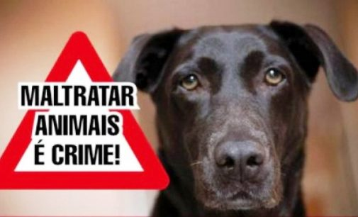 Policias de União da Vitória atendem caso de maus tratos a animal