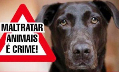 Moradora denúncia vizinhos por maus tratos a animais
