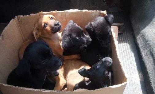 Policial de Porto União flagra abandono de filhotes de cães