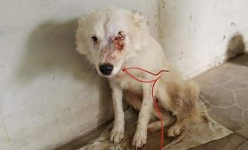 Animal é ferido por disparo de arma em Porto União