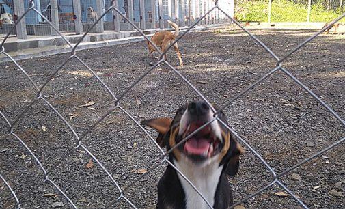 Porto União inaugura Centro Tratamento e Reabilitação de Animais