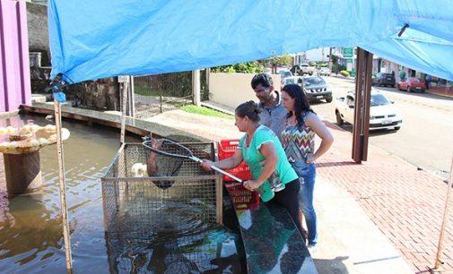Produtores de Bituruna realizam Feira do Peixe